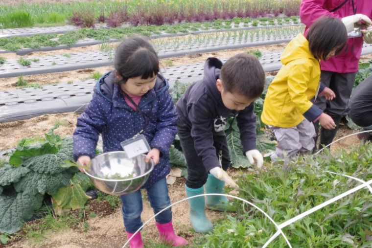エディブル収穫体験写真